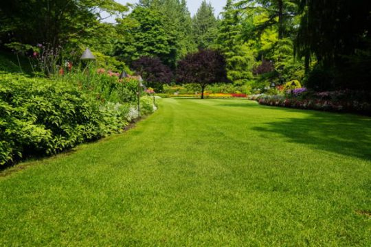 Beautiful trees and green grass  in  garden.